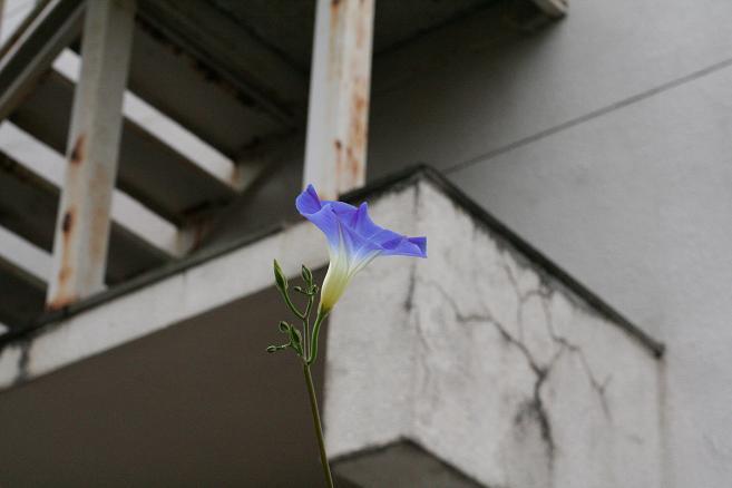 画像2013.05.01 003.JPG
