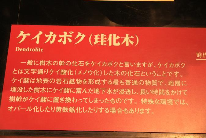 画像2013.05.01 047.JPG