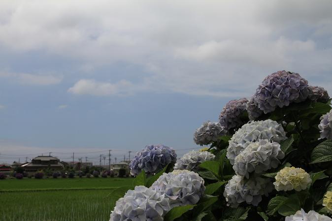 画像2013.05.01 755.JPG